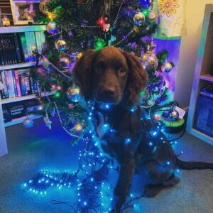 Dog wears christmas lights